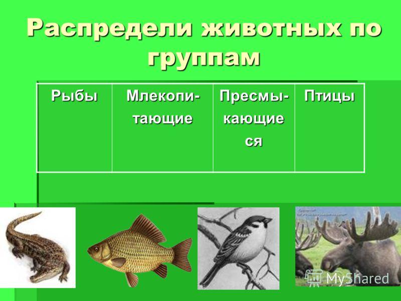 Распредели животных по группам РыбыМлекопи-тающиеПресмы-кающиесяПтицы