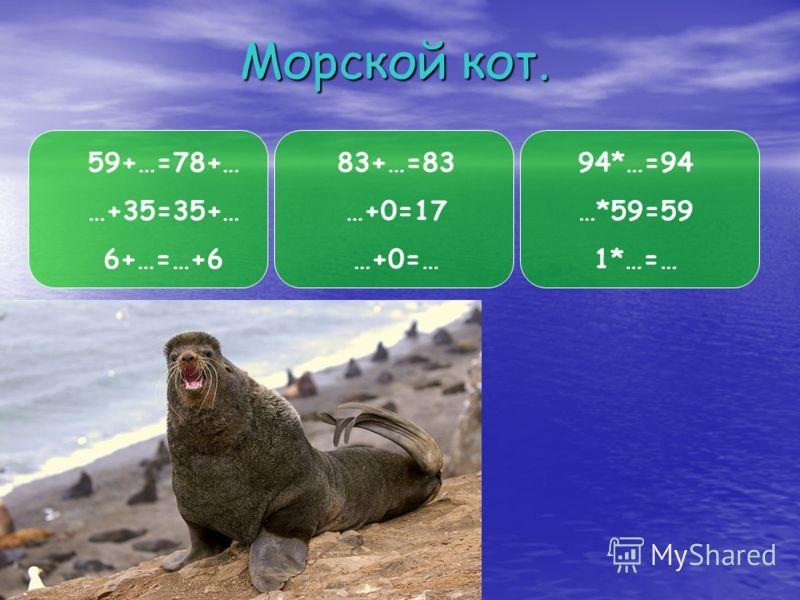 Морской кот. 59+…=78+… …+35=35+… 6+…=…+6 83+…=83 …+0=17 …+0=… 94*…=94 …*59=59 1*…=…