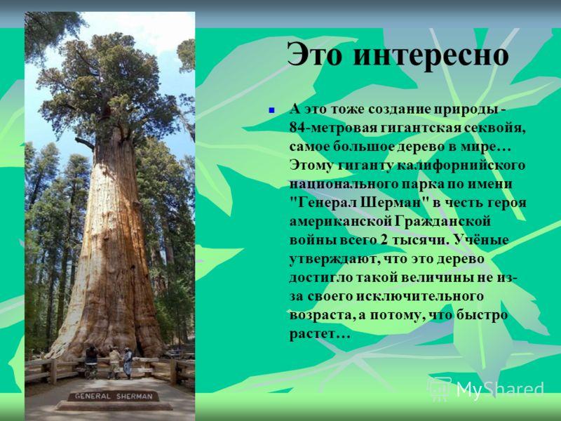 Это интересно Ну и баобаб! Это удивительное дерево достигает 30 метров в высоту и 11 метров в ширину…Раздутый ствол – вместилище для воды - баобаб может хранить целых 120 000 литров воды, чтобы вынести резкие условия засухи… Баобабы принимают форму б