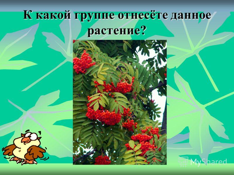 25 К какой группе отнесёте данное растение?