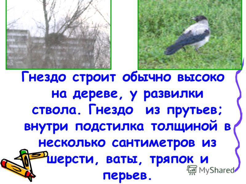 Ворона всеядная птица. Она поедает жуков, гусениц, бабочек, мух, дождевых червей, грызунов, яйца птиц и птенцов, ящериц, лягушек, рыб и семена растений.