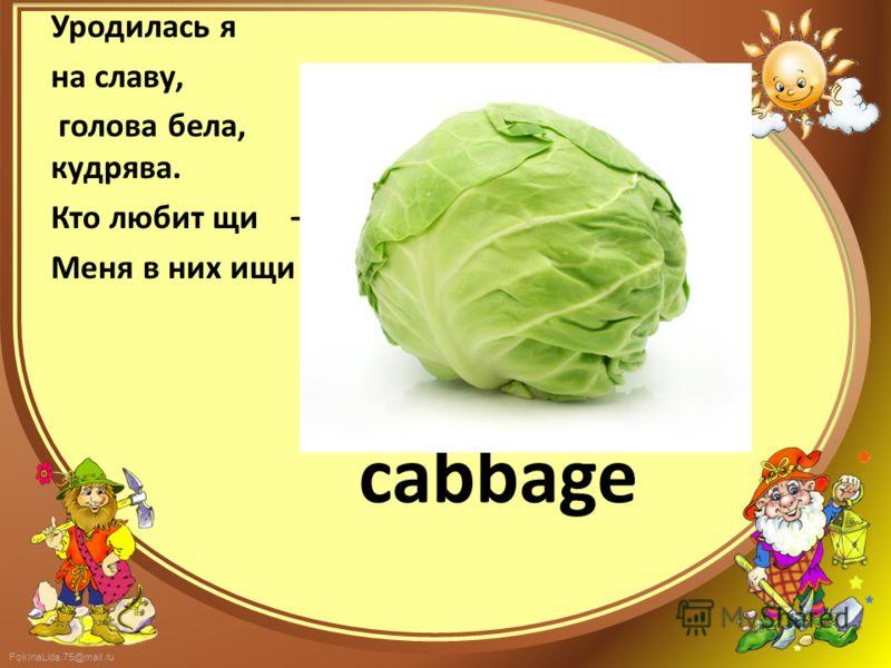 FokinaLida.75@mail.ru cabbage Уродилась я на славу, голова бела, кудрява. Кто любит щи – Меня в них ищи