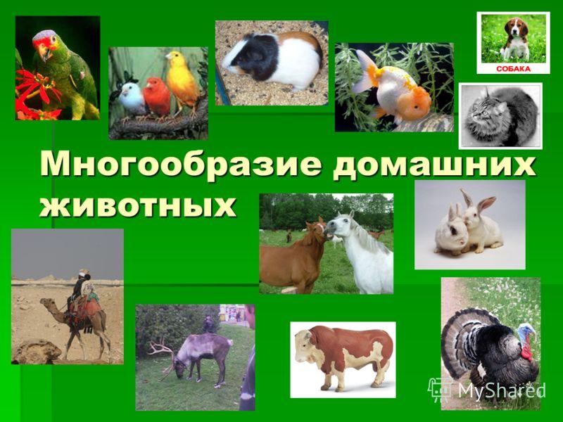 Многообразие домашних животных