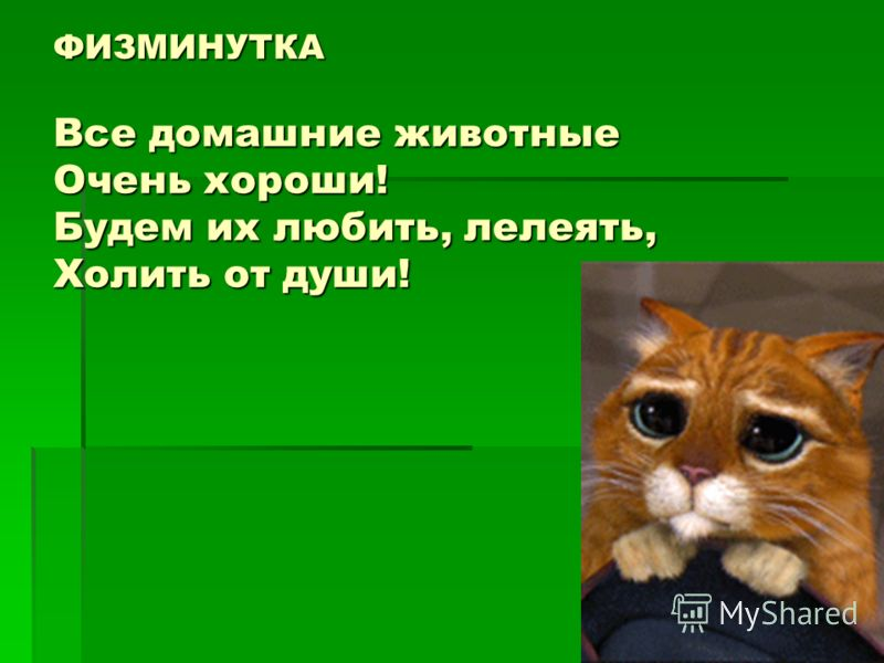 ФИЗМИНУТКА Все домашние животные Очень хороши! Будем их любить, лелеять, Холить от души!