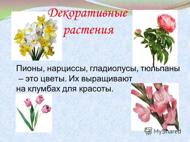 Декоративные растения пионы нарциссы