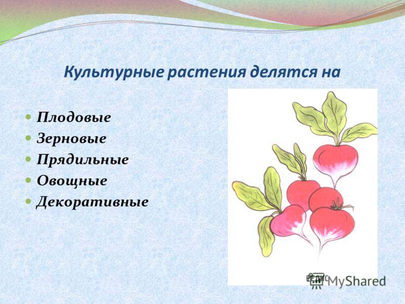Культурные растения делятся на Плодовые Зерновые Прядильные Овощные Декоративные