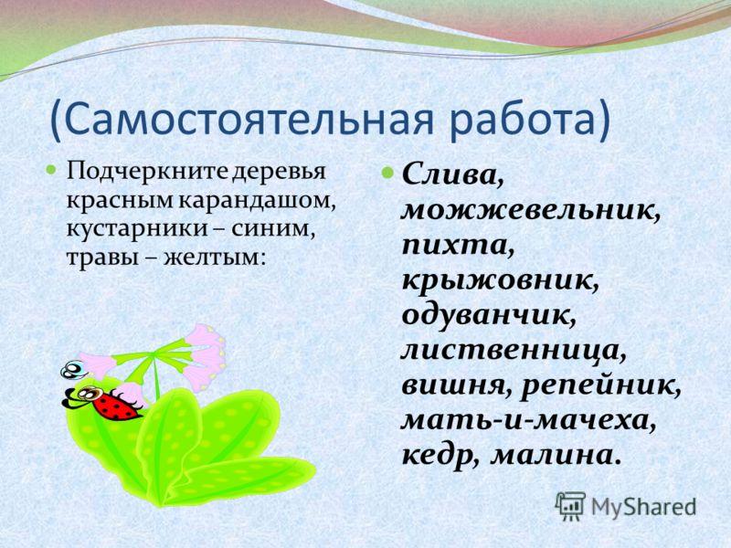 (Самостоятельная работа) Подчеркните деревья красным карандашом, кустарники – синим, травы – желтым: Слива, можжевельник, пихта, крыжовник, одуванчик, лиственница, вишня, репейник, мать-и-мачеха, кедр, малина.
