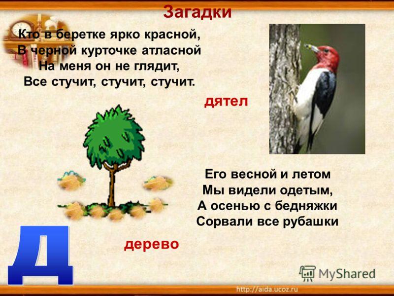 Загадки Его весной и летом Мы видели одетым, А осенью с бедняжки Сорвали все рубашки Кто в беретке ярко красной, В черной курточке атласной На меня он не глядит, Все стучит, стучит, стучит. дятел дерево