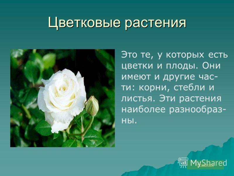 Цветковые растения Это те, у которых есть цветки и плоды. Они имеют и другие час- ти: корни, стебли и листья. Эти растения наиболее разнообраз- ны. главная