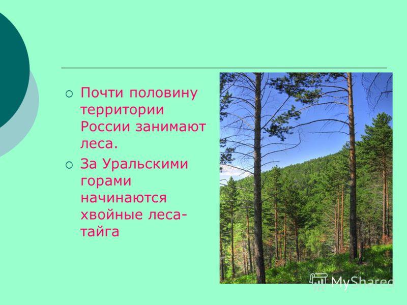 Почти половину территории России занимают леса. За Уральскими горами начинаются хвойные леса- тайга