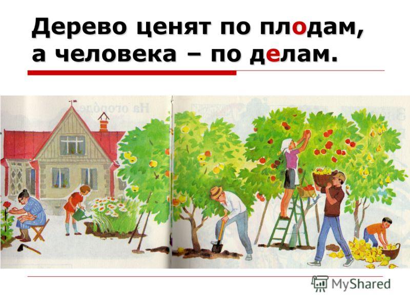 Дерево ценят по плодам, а человека – по делам.