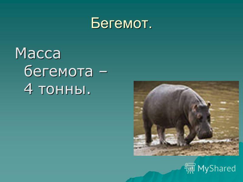 Бегемот. Масса бегемота – 4 тонны.
