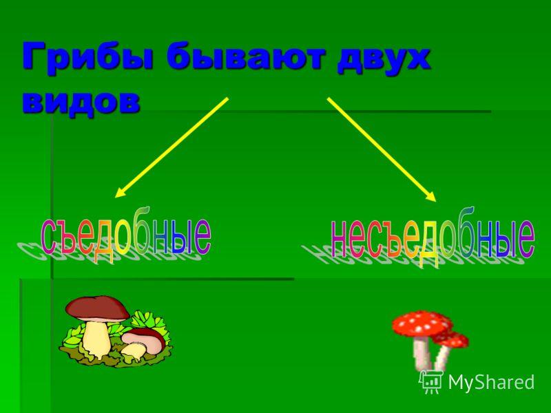 Грибы бывают двух видов