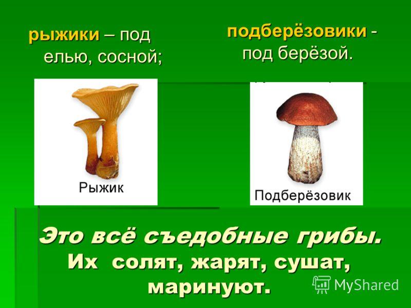 Это всё съедобные грибы. Их солят, жарят, сушат, маринуют. рыжики – под елью, сосной; подберёзовики - под берёзой.