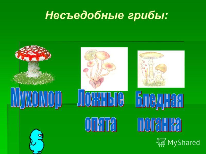 Несъедобные грибы: