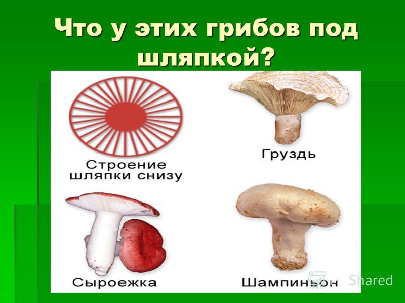 Что у этих грибов под шляпкой?