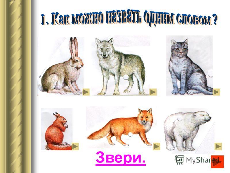 Палеозоология. Наука о древних ископаемых животных.