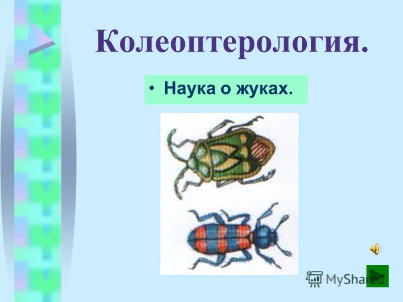 Лепидоптерология. Наука о бабочках.