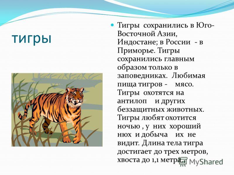 тигры Тигры сохранились в Юго- Восточной Азии, Индостане; в России - в Приморье. Тигры сохранились главным образом только в заповедниках. Любимая пища тигров - мясо. Тигры охотятся на антилоп и других беззащитных животных. Тигры любят охотится ночью,