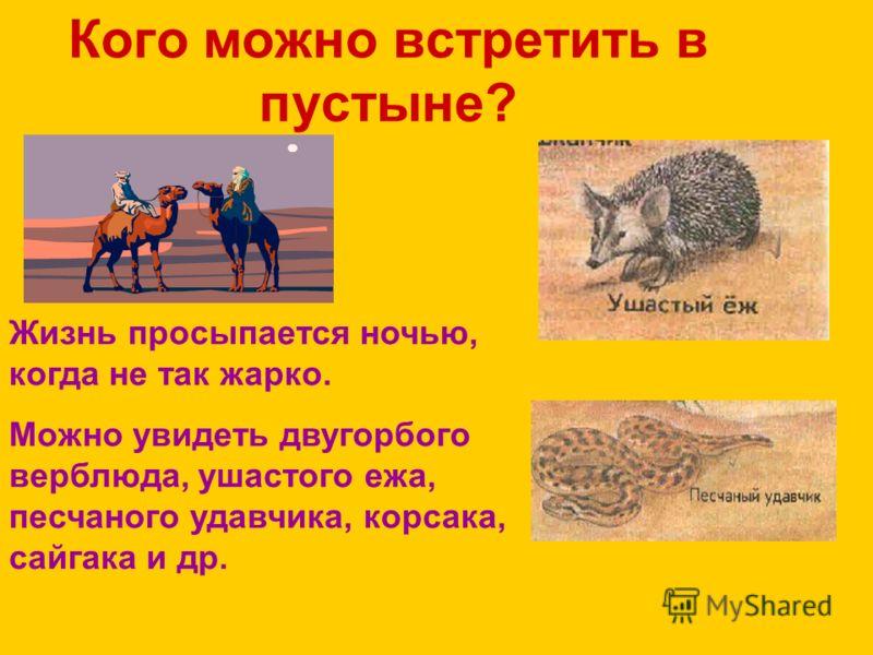 Кого можно встретить в пустыне? Жизнь просыпается ночью, когда не так жарко. Можно увидеть двугорбого верблюда, ушастого ежа, песчаного удавчика, корсака, сайгака и др.