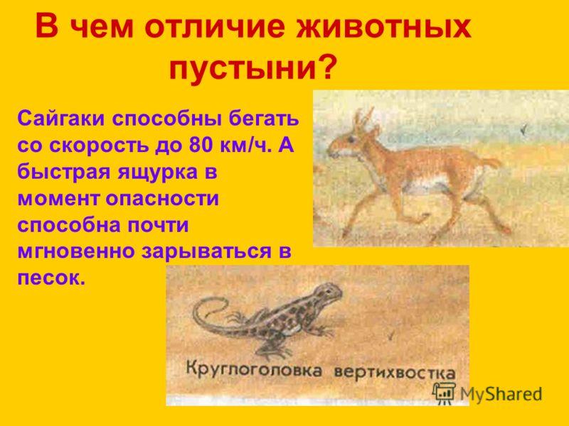 В чем отличие животных пустыни? Сайгаки способны бегать со скорость до 80 км/ч. А быстрая ящурка в момент опасности способна почти мгновенно зарываться в песок.