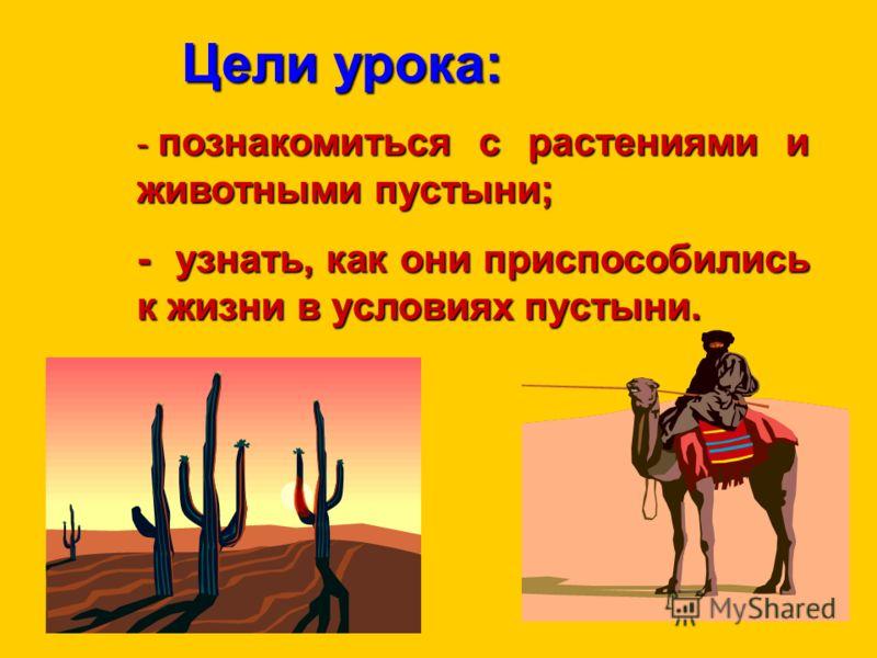 Цели урока: Цели урока: - познакомиться с растениями и животными пустыни; - узнать, как они приспособились к жизни в условиях пустыни.