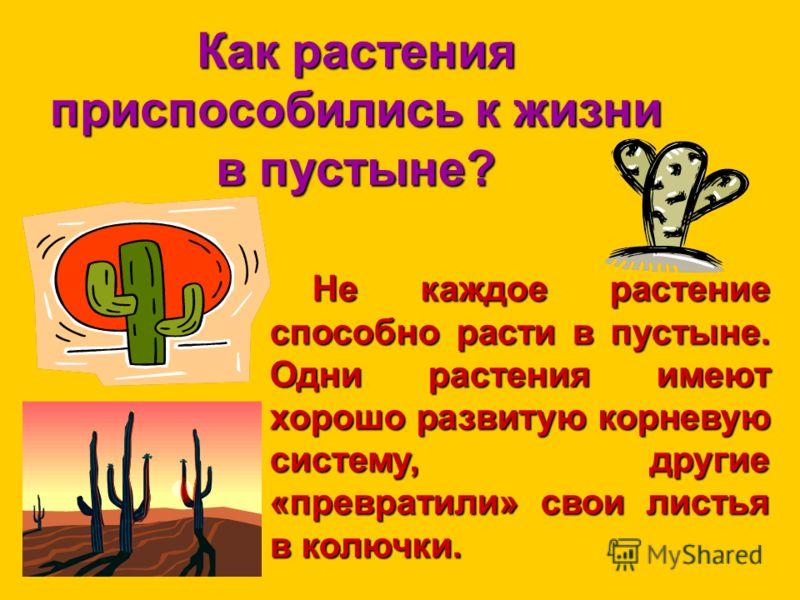 Как растения приспособились к жизни в пустыне? Не каждое растение способно расти в пустыне. Одни растения имеют хорошо развитую корневую систему, другие «превратили» свои листья в колючки.