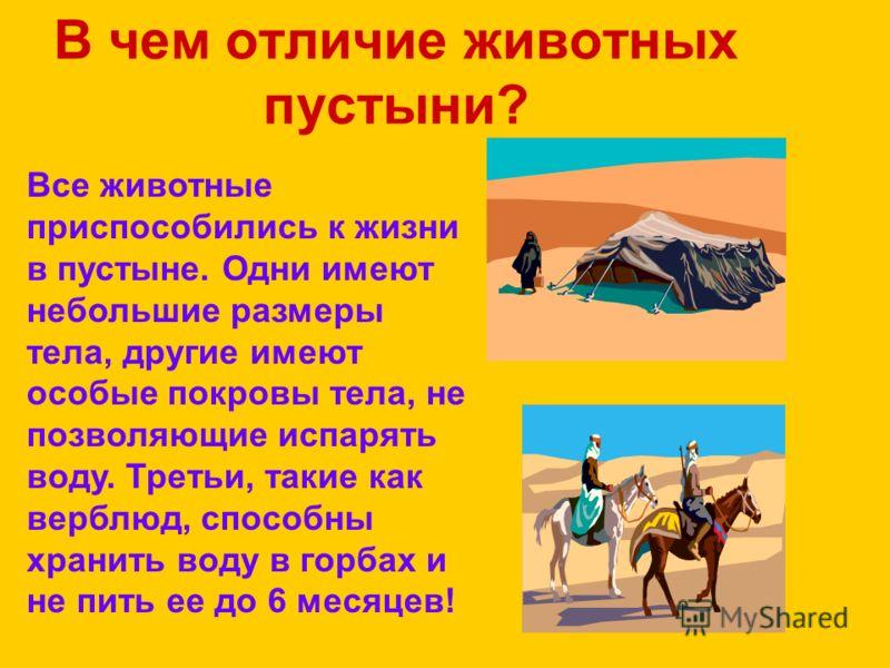 В чем отличие животных пустыни? Все животные приспособились к жизни в пустыне. Одни имеют небольшие размеры тела, другие имеют особые покровы тела, не позволяющие испарять воду. Третьи, такие как верблюд, способны хранить воду в горбах и не пить ее д
