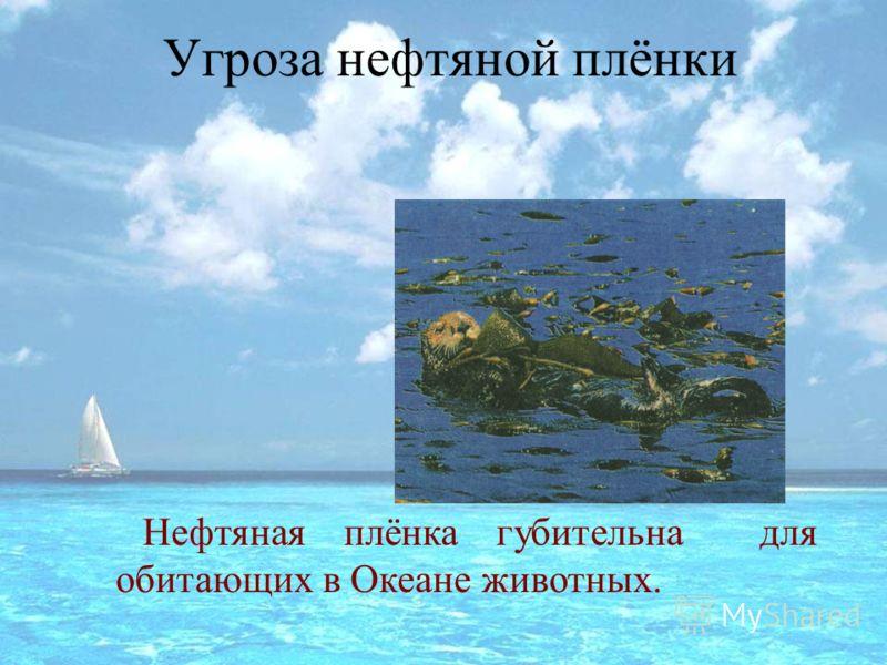 Угроза нефтяной плёнки Нефтяная плёнка губительна для обитающих в Океане животных.