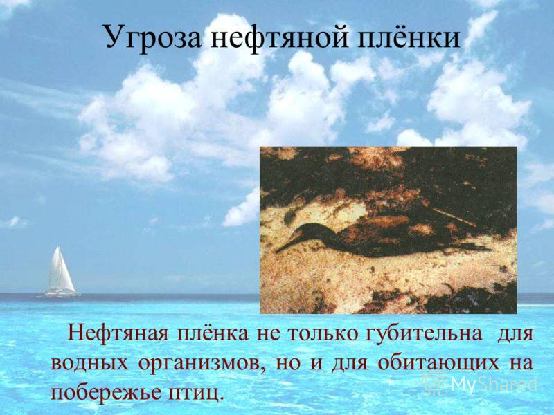 Угроза нефтяной плёнки Нефтяная плёнка не только губительна для водных организмов, но и для обитающих на побережье птиц.