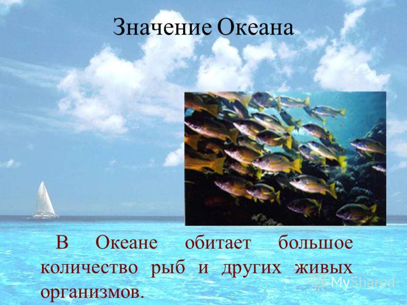 Значение Океана В Океане обитает большое количество рыб и других живых организмов.