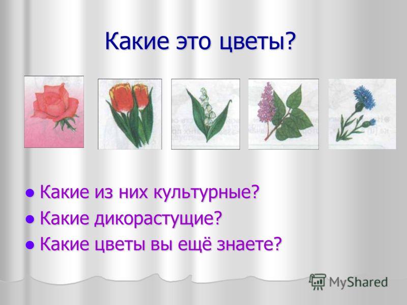 Какие это цветы? Какие из них культурные? Какие из них культурные? Какие дикорастущие? Какие дикорастущие? Какие цветы вы ещё знаете? Какие цветы вы ещё знаете?