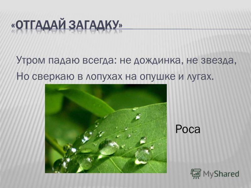 Утром падаю всегда: не дождинка, не звезда, Но сверкаю в лопухах на опушке и лугах. Роса