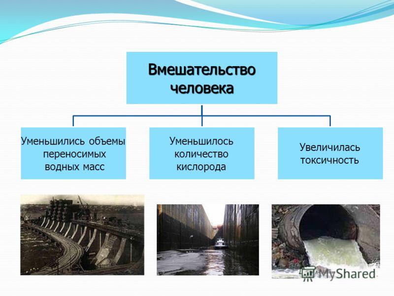 Вмешательствочеловека Уменьшились объемы переносимых водных масс Уменьшилось количество кислорода Увеличилась токсичность