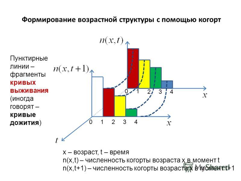 Формирование возрастной структуры с помощью когорт x – возраст, t – время n(x,t) – численность когорты возраста x в момент t n(x,t+1) – численность когорты возраста x в момент t+1 Пунктирные линии – фрагменты кривых выживания (иногда говорят – кривые