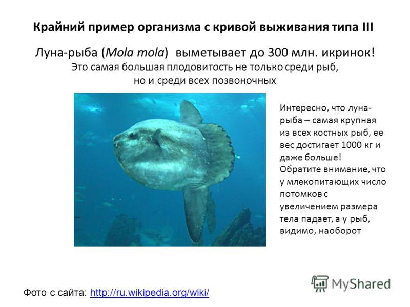 Луна-рыба (Mola mola) выметывает до 300 млн. икринок! Это самая большая плодовитость не только среди рыб, но и среди всех позвоночных Крайний пример организма с кривой выживания типа III Фото с сайта: http://ru.wikipedia.org/wiki/http://ru.wikipedia.