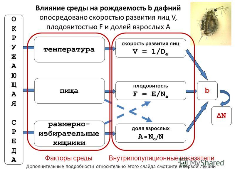 размерно- избирательные хищники ОКРУЖАЮЩАЯСРЕДАОКРУЖАЮЩАЯСРЕДА пища температура доля взрослых A = N a / N плодовитость F = E/N a скорость развития яиц V = 1/D e b Влияние среды на рождаемость b дафний опосредовано скоростью развития яиц V, плодовитос