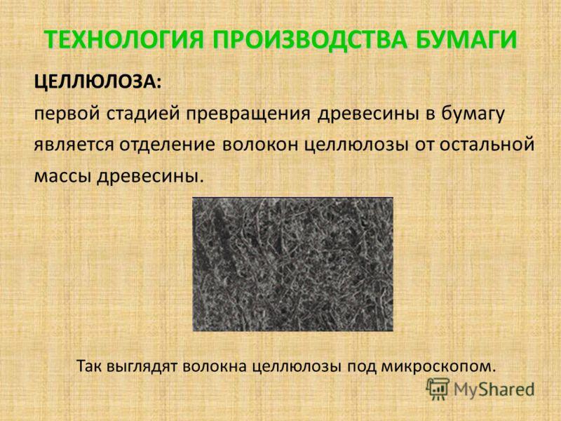 ТЕХНОЛОГИЯ ПРОИЗВОДСТВА БУМАГИ ЦЕЛЛЮЛОЗА: первой стадией превращения древесины в бумагу является отделение волокон целлюлозы от остальной массы древесины. Так выглядят волокна целлюлозы под микроскопом.