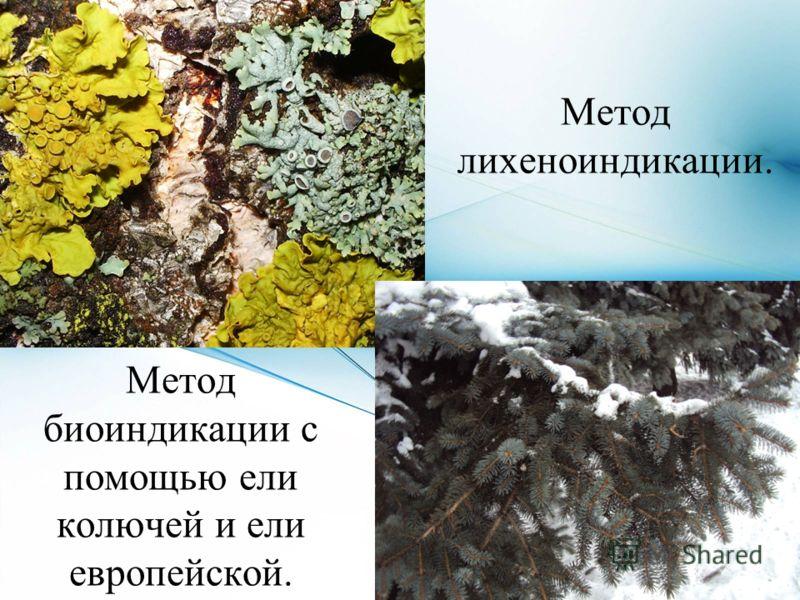 Метод лихеноиндикации. Метод биоиндикации с помощью ели колючей и ели европейской.