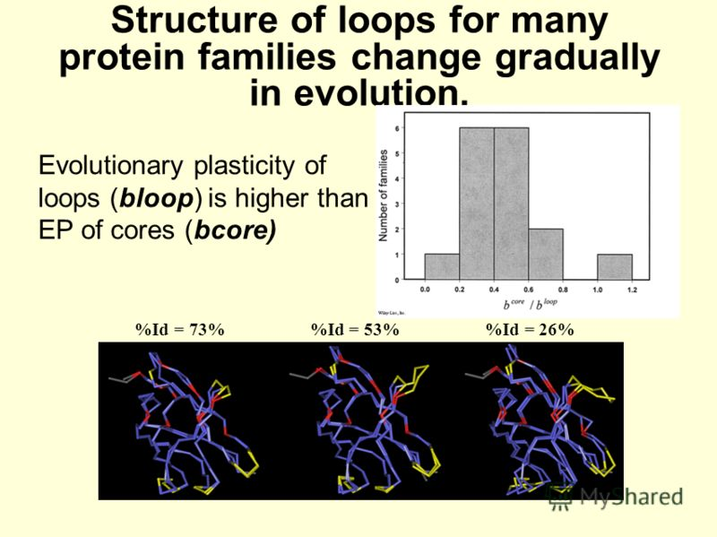 Structure of loops for many protein families change gradually in evolution. %Id = 73% %Id = 53% %Id = 26% Evolutionary plasticity of loops (bloop) is higher than EP of cores (bcore)