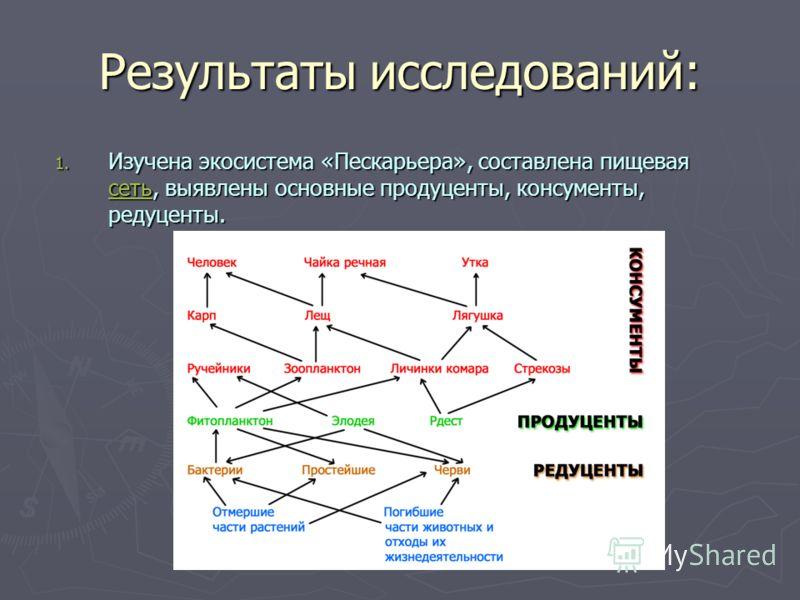 Результаты исследований: 1. Изучена экосистема «Пескарьера», составлена пищевая сеть, выявлены основные продуценты, консументы, редуценты. сеть