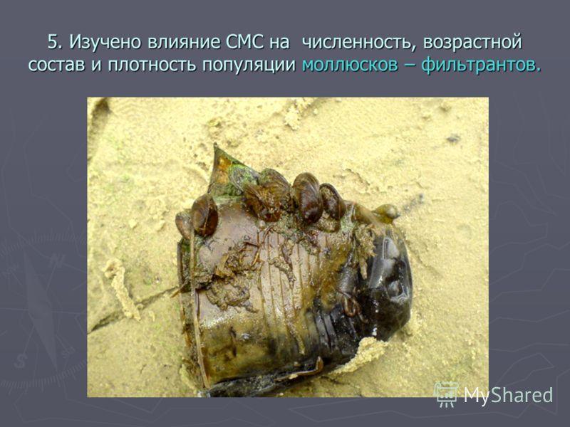 5. Изучено влияние СМС на численность, возрастной состав и плотность популяции моллюсков – фильтрантов.