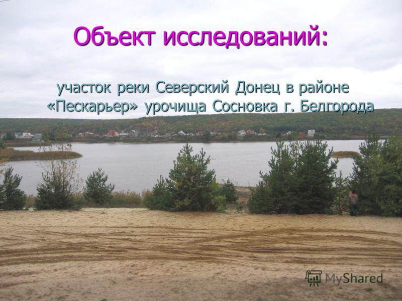 Объект исследований: участок реки Северский Донец в районе «Пескарьер» урочища Сосновка г. Белгорода