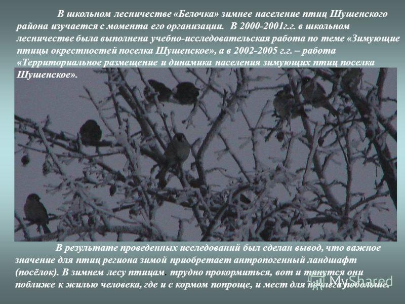 В школьном лесничестве «Белочка» зимнее население птиц Шушенского района изучается с момента его организации. В 2000-2001г.г. в школьном лесничестве была выполнена учебно-исследовательская работа по теме «Зимующие птицы окрестностей поселка Шушенское