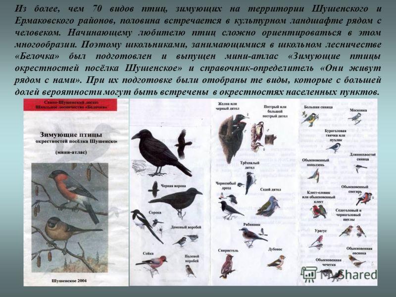 Из более, чем 70 видов птиц, зимующих на территории Шушенского и Ермаковского районов, половина встречается в культурном ландшафте рядом с человеком. Начинающему любителю птиц сложно ориентироваться в этом многообразии. Поэтому школьниками, занимающи