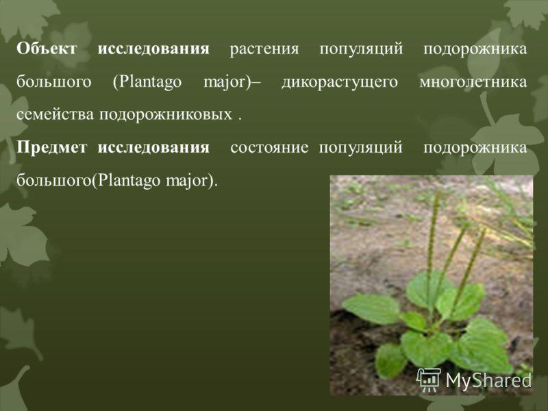 Объект исследования растения популяций подорожника большого (Plantago major)– дикорастущего многолетника семейства подорожниковых. Предмет исследования состояние популяций подорожника большого(Plantago major).