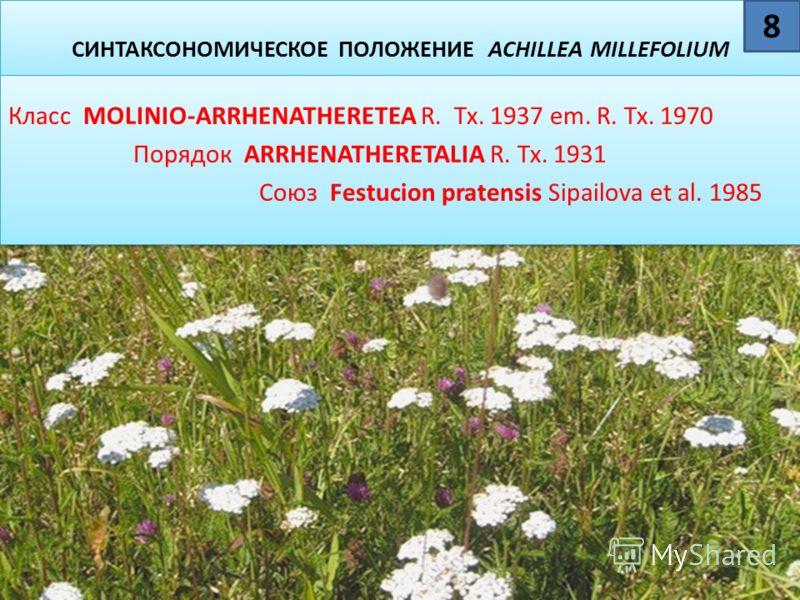 СИНТАКСОНОМИЧЕСКОЕ ПОЛОЖЕНИЕ ACHILLЕA MILLEFОLIUM Класс MOLINIO-ARRHENATHERETEA R. Tx. 1937 em. R. Tx. 1970 Порядок ARRHENATHERETALIA R. Tx. 1931 Союз Festucion pratensis Sipailova et al. 1985 Класс MOLINIO-ARRHENATHERETEA R. Tx. 1937 em. R. Tx. 1970