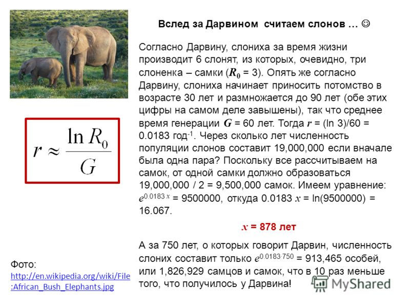 Вслед за Дарвином считаем слонов … Согласно Дарвину, слониха за время жизни производит 6 слонят, из которых, очевидно, три слоненка – самки ( R 0 = 3). Опять же согласно Дарвину, слониха начинает приносить потомство в возрасте 30 лет и размножается д
