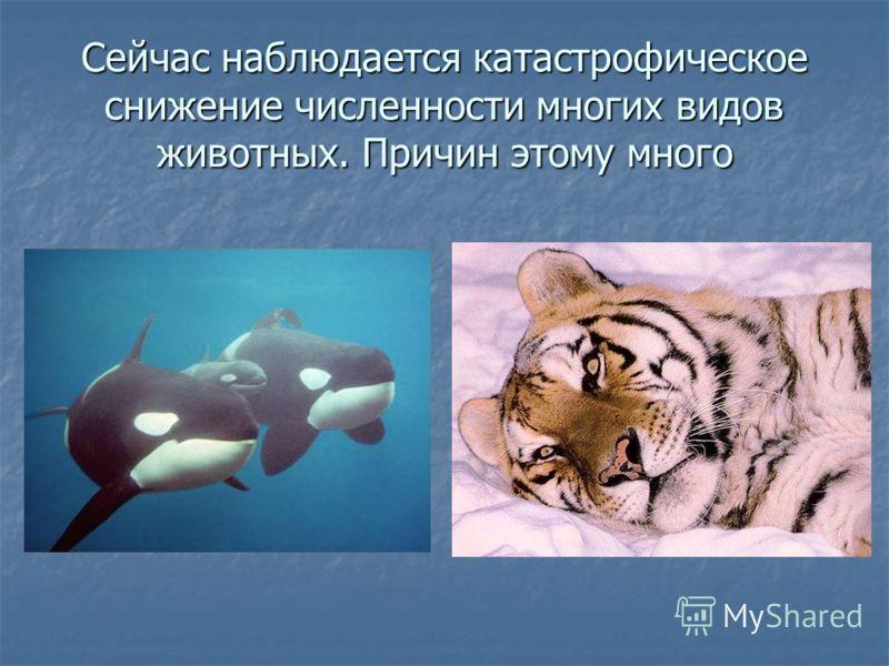 Сейчас наблюдается катастрофическое снижение численности многих видов животных. Причин этому много