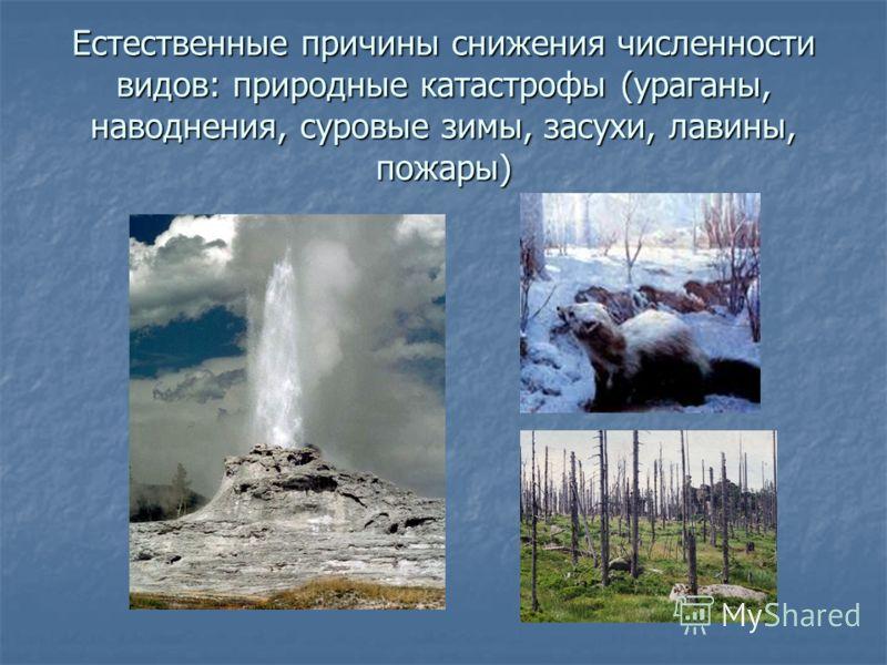Естественные причины снижения численности видов: природные катастрофы (ураганы, наводнения, суровые зимы, засухи, лавины, пожары)